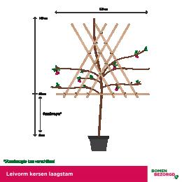 Lei kersenboom